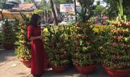 Ngỡ ngàng với nhiều loại hoa kiểng, trái độc lạ dịp Tết