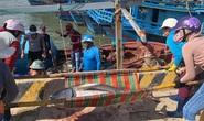 Ngư dân Phú Yên mỏi tay khiêng cá ngừ đại dương