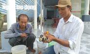 Lý do cua biển ngon nhất miền Tây trúng giá dịp Tết Canh Tý
