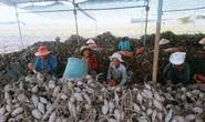 Nông sản Việt mất đường sang Trung Quốc vì virus corona