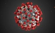 Chỉ một tuần, virus corona làm giới công nghệ hỗn loạn