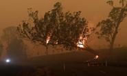 """Úc bắt giữ 24 người """"đổ thêm dầu vào lửa"""" giữa thảm họa cháy rừng"""