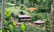 Làng biệt thự trái phép trong rừng: UBND tỉnh Lâm Đồng chỉ đạo khẩn, cắt điện trung thế