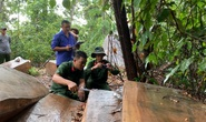 Còn phá rừng, còn thảm họa thiên tai