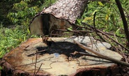 Bắt tạm giam đối tượng phá rừng ở Lâm Đồng