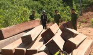 Khởi tố nguyên giám đốc công ty lâm nghiệp bất lực để rừng bị tàn phá