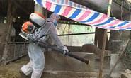 Ổ dịch tả heo châu Phi tái xuất hiện sau 1 năm tại Quảng Bình