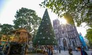 Cận cảnh những cây thông khổng lồ dịp Giáng sinh