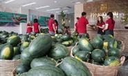 Hội doanh nhân trẻ giải cứu hơn 2.000 tấn dưa hấu, thanh long