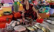 Tiểu thương vô tư xẻ thịt rùa xanh quý hiếm bán ở chợ Hà Tiên