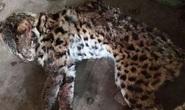 Tàng trữ 49 cá thể động vật quý hiếm, 2 đối tượng đồng niên bị khởi tố