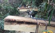 Đoàn lâm tặc đang rầm rộ đưa gỗ ra khỏi rừng thì bị bắt
