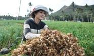 Đề nghị Bộ Công an xác minh tài khoản facebook Lương Hoàng Anh chém gió về tỏi Lý Sơn