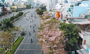 [Video] - Ngắm hoa kèn hồng rực rỡ từ trên cao