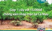 Chủ tịch Cà Mau chỉ đạo làm rõ việc vận động trồng rừng chống xâm nhập mặn