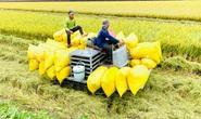 Xuất khẩu gạo: Những ngày hồi hộp...