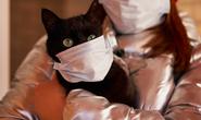 Mèo nhiễm virus SARS-CoV-2, chó được thử nghiệm để phát hiện người bệnh