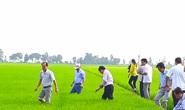 Bộ Công Thương hoả tốc xin ý kiến về an ninh lương thực quốc gia đối với gạo nếp