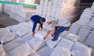 Khuất tất trong xuất khẩu gạo