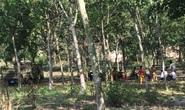 Phát hiện thi thể cháy đen trong rừng cao su ở Bình Dương