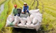 22 doanh nghiệp không có gạo tại cảng vẫn đăng ký tờ khai xuất khẩu