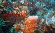 Phát hiện thần dược quét sạch ung thư trong sinh vật kỳ dị ở Đông Nam Á