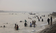 Đàn cá kình con vào sát kè biển Thuận An, nhiều người lao xuống vây bắt