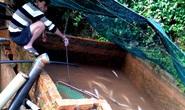 Lâm Đồng: Hàng tấn cá tầm chết nghi bị nhiễm độc