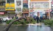 CLIP: Gió giật mạnh bứng 2 cây xanh trên đường Võ Văn Tần - TP HCM
