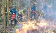 Miền Trung - Tây Nguyên: Nguy cơ cháy rừng rất cao
