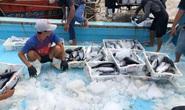 Trọn đời bám biển: Đạp sóng Hoàng Sa, Trường Sa