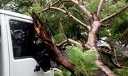 TP HCM: Phượng vĩ kế trường đại học bật gốc, đè xe tải trong cơn mưa