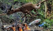 Tổng Biên tập Tạp chí Sông Hương lên tiếng việc bị gán tội giết thịt động vật quý hiếm