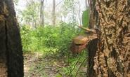 Rừng bảo tồn Tà Cú bị đầu độc