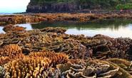 Ngắm tuyệt tác san hô cực đẹp ở Gành Yến – Quảng Ngãi