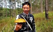Kỳ thú săn nấm rừng thông Đà Lạt