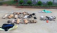 Cặp tình nhân dùng chất độc xyanua đánh bả trộm gần nửa tấn chó mèo bị khởi tố