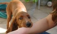 Đừng chần chừ tiêm ngừa khi bị chó cắn