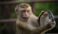 Khỉ nghiện rượu tấn công 250 người bị kết án chung thân