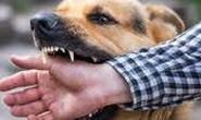 Người đàn ông tử vong do chó dại cắn 2 năm nhưng không đi chích ngừa
