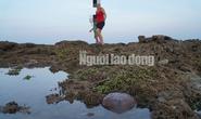 Quảng Ngãi: Nguy cơ rạn san hô ở gành Yến bị phá nát