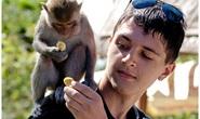 Từ ngày 1-6, Khu du lịch Đảo Khỉ và Đảo Hoa Lan đón khách trở lại