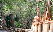 Hàng vạn hecta rừng bị xóa sổ