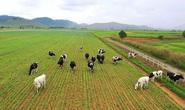 Vinamilk giữ vững tốp 50 công ty niêm yết tốt nhất Việt Nam năm 2020