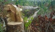 Bình Thuận: Yêu cầu lập chuyên án điều tra vụ đầu độc Khu bảo tồn Tà Cú