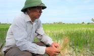 Hàng ngàn ha lúa chết cháy, ruộng đồng nứt toác vì đợt nắng nóng kỉ lục