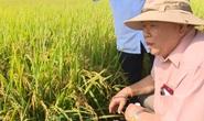 """NÔNG DÂN MIỀN TÂY BẮT TAY LÀM """"NGƯỜI TỬ TẾ"""" (*): Gầy dựng thương hiệu cho nông sản"""