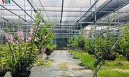 Cơn sốt lan đột biến tiền tỉ tràn về vựa hoa Đông La