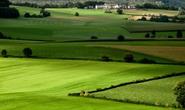 Cán bộ, công chức mua đất trồng lúa sẽ bị phạt đến 5 triệu đồng