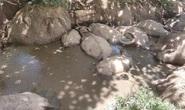 Đàn trâu hàng trăm triệu đồng lăn ra chết bất thường, nghi bị đầu độc